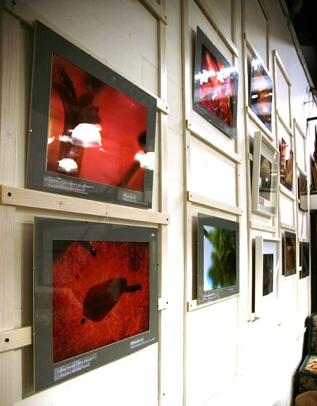 Картины выставки Геннадия Немых в студии дизайна BriArt